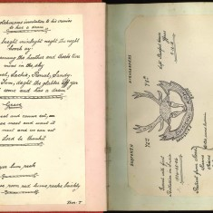 Double page with handwritten entries in Nurse Harvey's autograph album | Courtesy of the Imperial War Museum