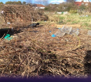 Image showing lots of dead wood on the allotment plot. | Southlands Road Allotment and Gardens Association
