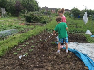 Colour photograph showing two volunteers digging on the allotment.   Southlands Road Allotment and Gardens Association