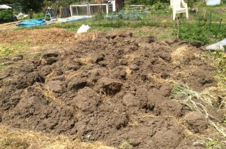 Colour photograph showing earth at the allotment   Southlands Road Allotment and Gardens Association