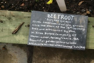 A colour photograph showing a slate with information about beetroot.