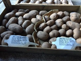 Potatoes   Southlands Road Allotment and Gardens Association