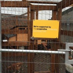 Chicken coop | Southlands Road Allotment and Gardens Association