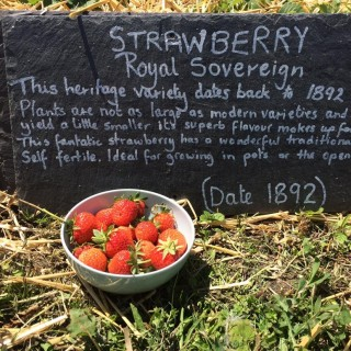 A bowl of Royal Sovereign strawberries | Southlands Road Allotment and Gardens Association