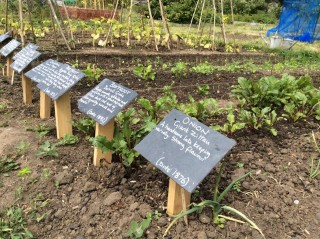 Produce with information plaques. | Southlands Road Allotment and Gardens Association